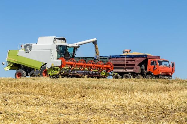 Il tecnico lavora sul campo per il raccolto Foto Premium