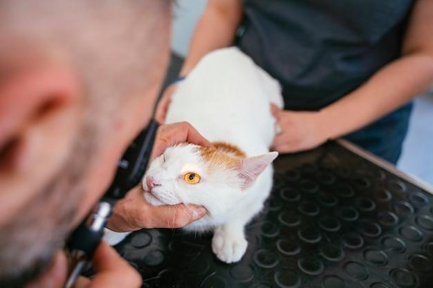 Il veterinario maschio e l'infermiere che esaminano con la lente d'ingrandimento e accendono un gatto cieco per chirurgia dell'occhio del laser. Foto Premium