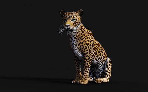 Illustrazione 3d del leopardo isolato su priorità bassa nera Foto Premium