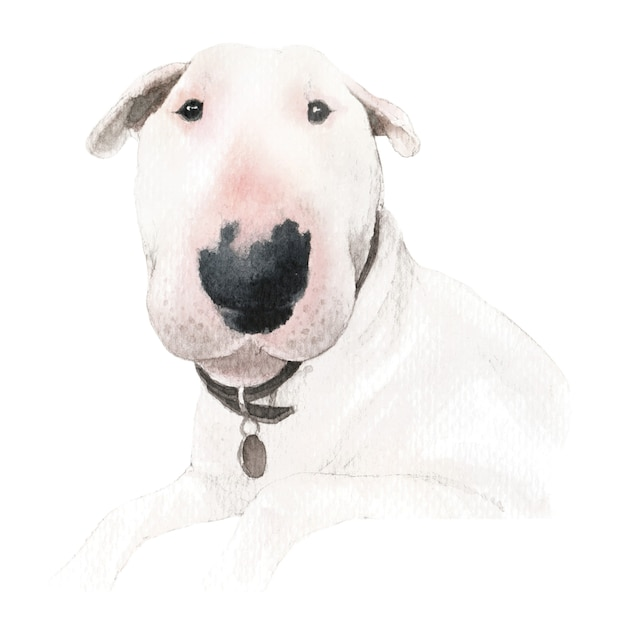Illustrazione dell'acquerello del cane bull terrier Foto Premium