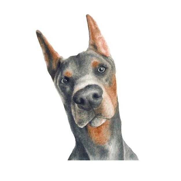 Illustrazione dell'acquerello del cane del pinscher del doberman Foto Premium