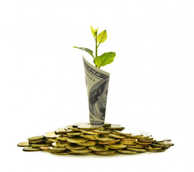 Immagine del mucchio delle monete e della banconota rotolata con la pianta sull'affare di mostra superiore Foto Premium