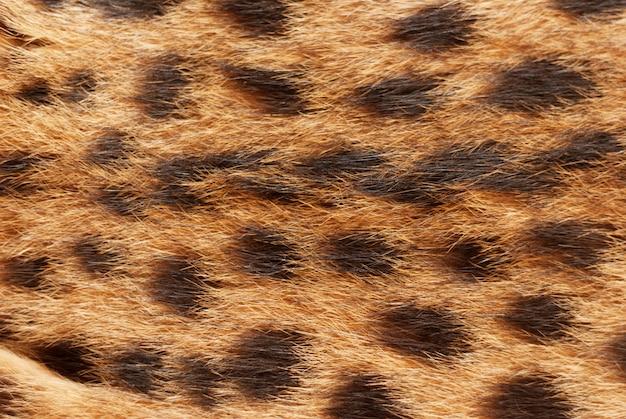 Impronta animale. gatto selvatico, trama di pelliccia serval. chiuda sullo sfondo naturale del fuoco molle Foto Premium