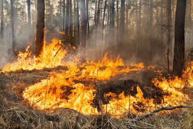 Incendi boschivi in corso Foto Premium