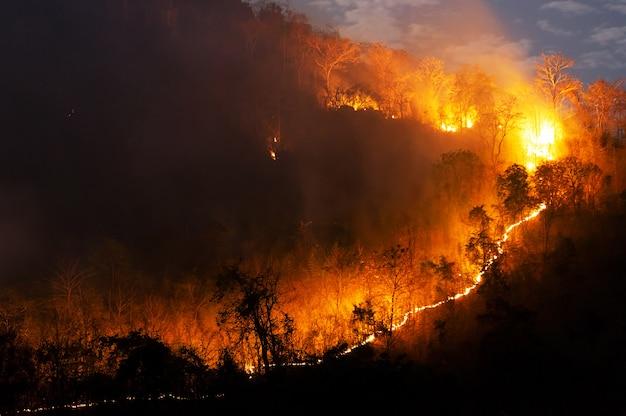 Incendio forestale Foto Premium