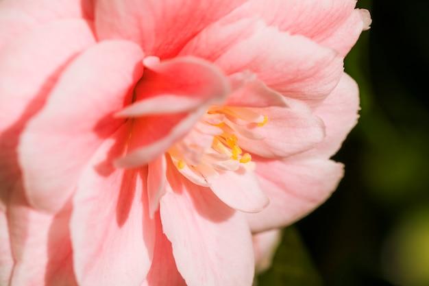 Incredibili petali di rosa freschi di fiori Foto Gratuite