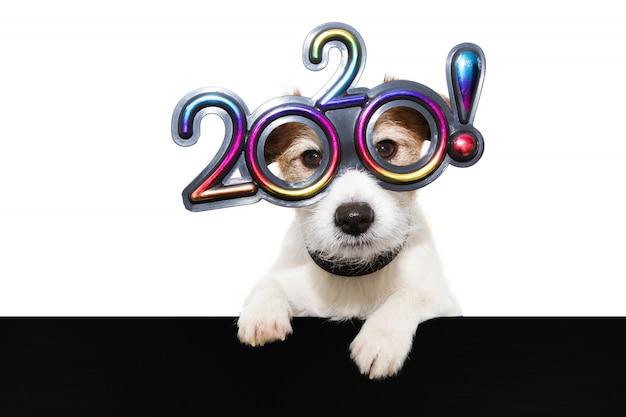 Insegua il nuovo anno con le zampe sopra il bordo nero che indossa gli occhiali con il testo 2020 su bianco Foto Premium