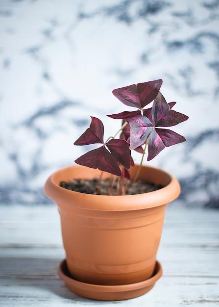 Interno della pianta della casa Foto Gratuite