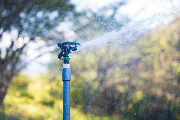 Irrigato con aspersione nella piacevole luce della sera Foto Premium