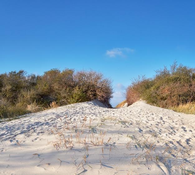Isola di hiddensee, al largo della costa baltica della germania settentrionale, entrata sabbiosa sulla spiaggia attraverso dune sul mare Foto Premium