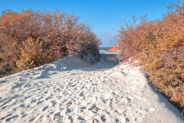 Isola di hiddensee, al largo della costa baltica della germania settentrionale, entrata sabbiosa sulla spiaggia attraverso le dune sul mare Foto Premium