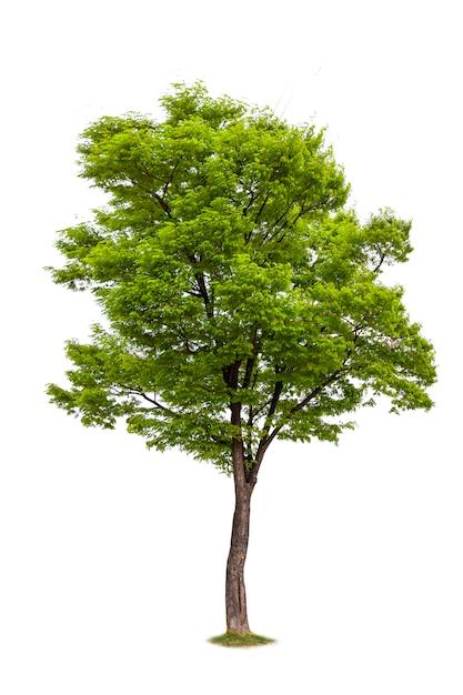 Isolato dell'albero per la decorazione di ecologia Foto Premium