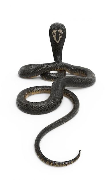 King cobra il serpente velenoso più lungo del mondo isolato su fondo bianco con il ritaglio p Foto Premium
