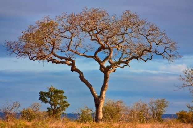 Kruger parco scenario hdr Foto Gratuite