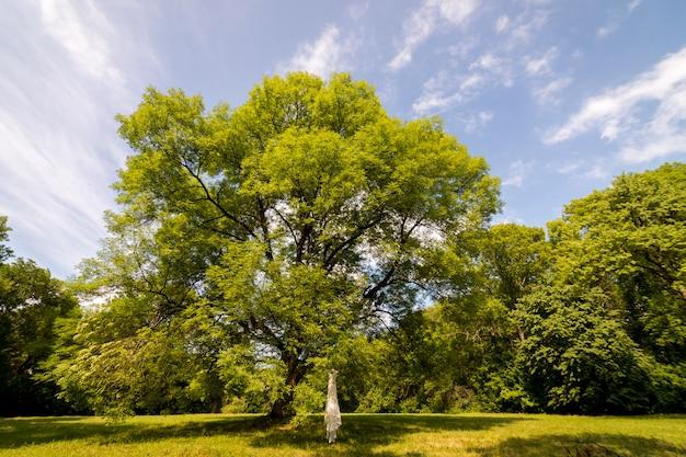 L'abito da sposa appeso ai rami degli alberi. albero in un prato Foto Premium