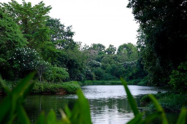 L'acqua scorre attraverso la natura e l'abbondanza di alberi nel flusso. Foto Premium