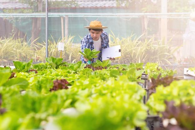 L'agricoltore biologico controlla il loro biologico per sviluppare ortaggi coltivati biologici con copyspace. Foto Premium
