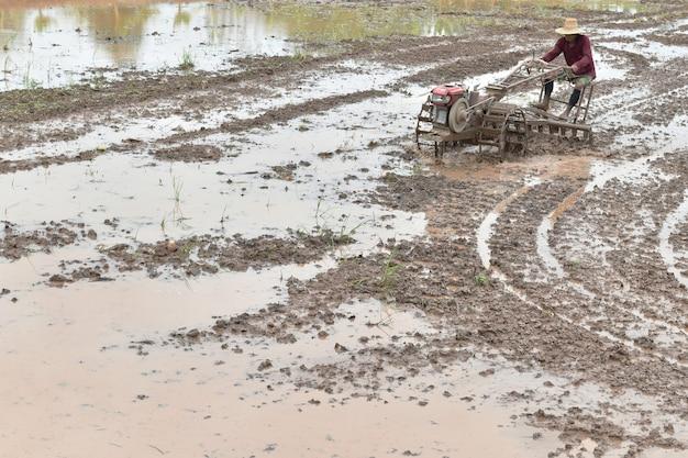 L'agricoltore che ara nel giacimento del riso prepara il riso della pianta nell'ambito della luce solare Foto Premium