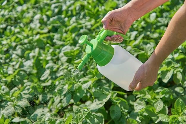 L'agricoltore spruzza il pesticida con lo spruzzatore manuale contro gli insetti sulla piantagione di patate in giardino di estate. concetto di agricoltura e giardinaggio Foto Premium