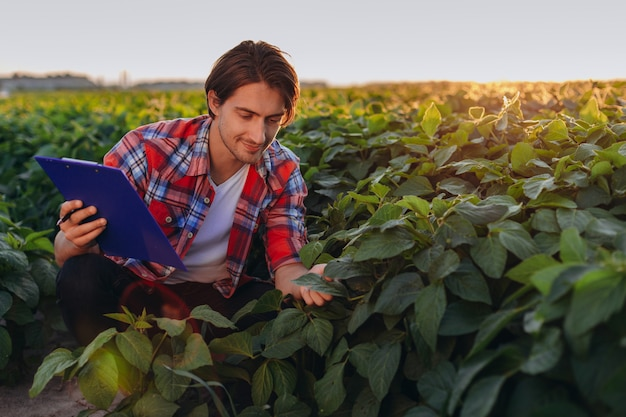 L'agronomo sorridente in un campo che prende il controllo della resa e tocca le piante nel tramonto. Foto Premium