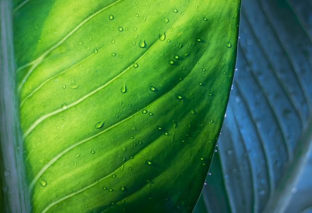 L'albero lascia il bokeh per il fondo della natura e conserva il concetto verde Foto Premium