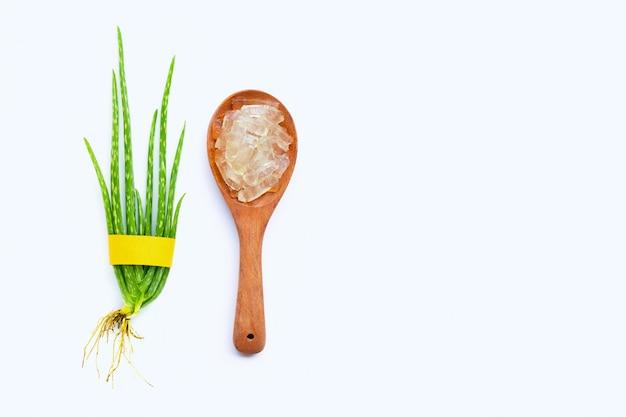 L'aloe vera è una pianta medicinale popolare per la salute e la bellezza Foto Premium