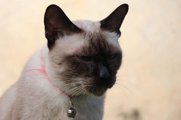 L'animale domestico del gatto di brown non esamina il ritratto della macchina fotografica Foto Premium
