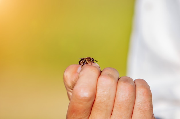L'apicoltore esamina le api nei favi. mani dell'apicoltore. Foto Premium