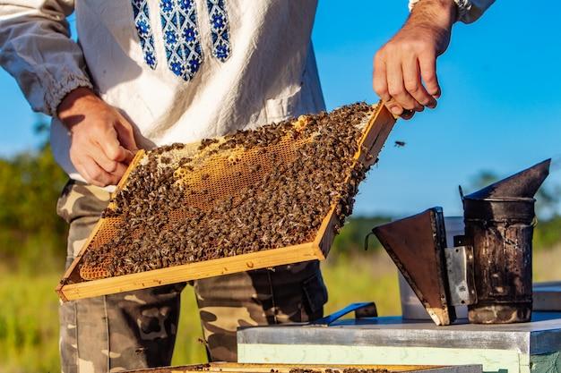 L'apicoltore esamina le api nei favi Foto Premium