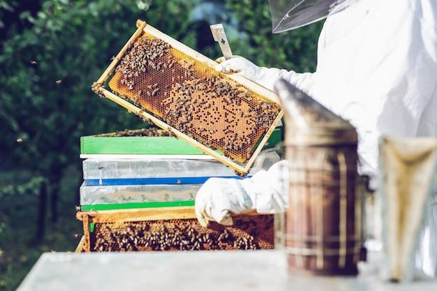 L'apicoltore tiene una cella di miele con le api in mano. Foto Premium