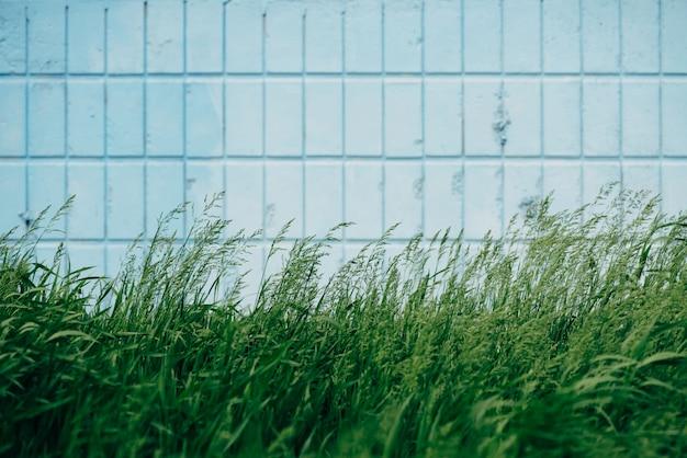 L'erba si sviluppa sulla parete delle mattonelle blu di rettangolo vicino su. Foto Premium