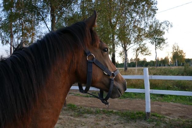 L'immagine di un cavallo nella foresta. composizione naturale Foto Premium