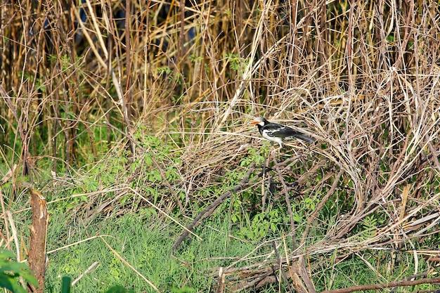 L'uccello nella foresta alla tailandia Foto Premium