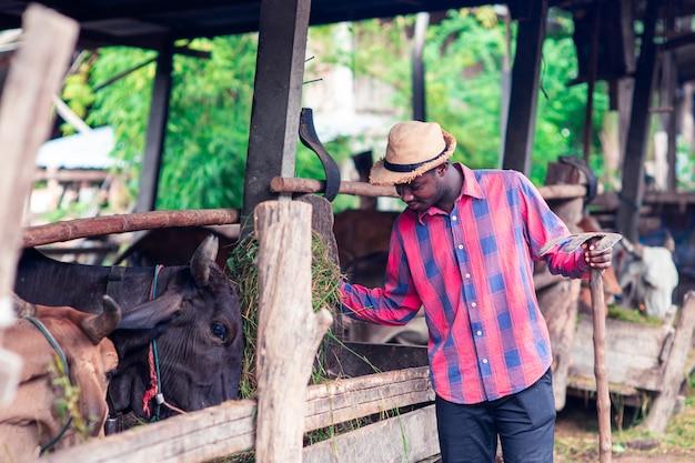 L'uomo africano del coltivatore sta stando nel suo luogo di lavoro vicino alle mucche alla fattoria Foto Premium