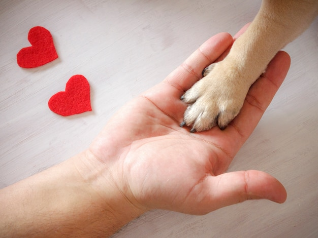 L'uomo tiene la zampa del cane con amore. cuori rossi su sfondo bianco Foto Premium