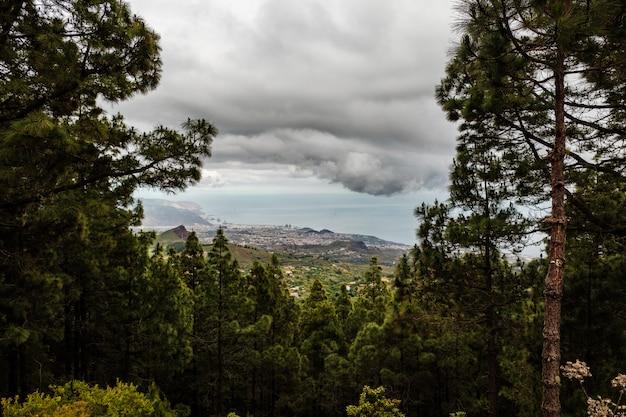 La città di santa cruz de tenerife vista da una radura di una fitta foresta Foto Premium