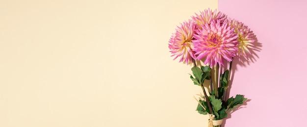 La dalia fiorisce su fondo rosa e giallo Foto Premium