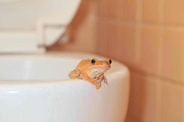 La fauna selvatica invade la casa, la rana in bagno Foto Premium