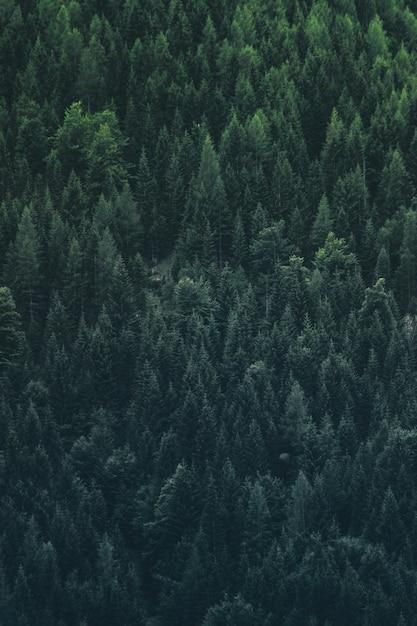 La foresta sta chiamando Foto Premium