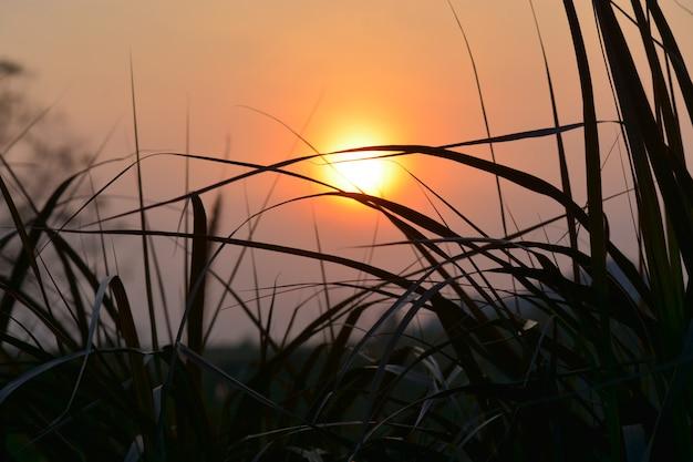 La luce del sole splende attraverso l'erba al mattino Foto Premium