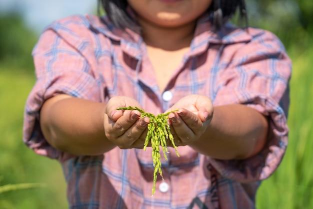 La mano dell'agricoltore che tiene una risaia nell'azienda agricola della tailandia. Foto Premium