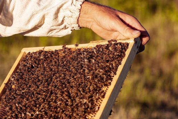 La mano dell'apicoltore sta lavorando con api e alveari sull'apiario Foto Premium