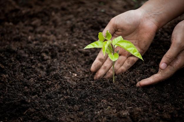 La mano della donna che pianta il giovane albero su suolo nero come risparmi il concetto del mondo Foto Premium