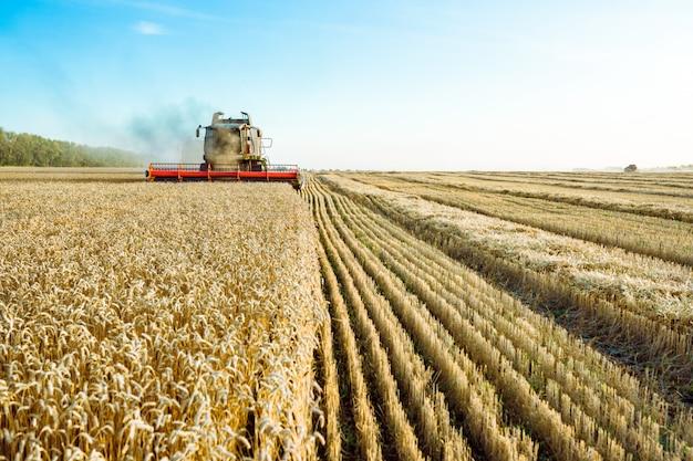 La mietitrebbia raccoglie grano maturo. concetto di un raccolto ricco. immagine di agricoltura Foto Premium