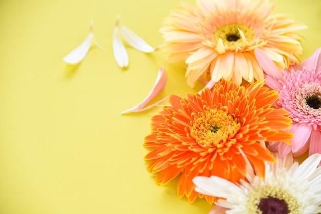 La molla variopinta della gerbera fiorisce la bella fioritura dell'estate sulla priorità bassa gialla Foto Premium