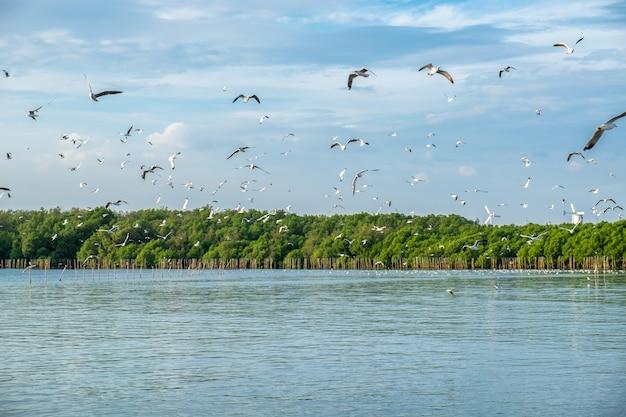 La moltitudine di gabbiani emigra il volo nella foresta della mangrovia al golfo della tailandia Foto Premium