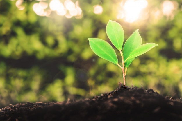 La nuova vita della piantina di una giovane pianta cresce nel suolo nero Foto Premium