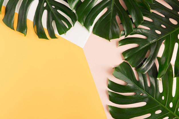 La palma tropicale monstera lascia sul fondo giallo e rosa dell'estate. vista piana, vista dall'alto Foto Premium