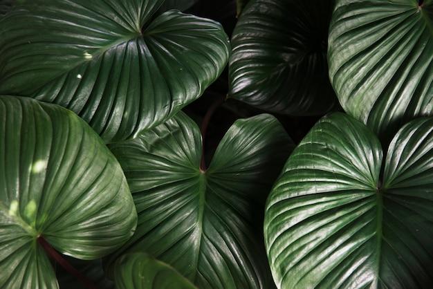 La pianta verde lascia la natura Foto Gratuite
