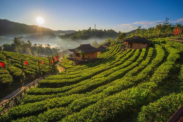 La piantagione di tè sulla natura le montagne in ban rak thai, mae hong son, tailandia Foto Premium